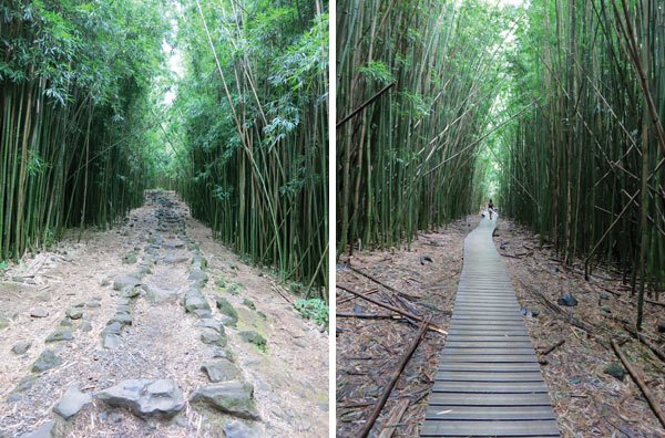 Bamboo Forest pathway to Waimoku Falls - Pipiwai Trail on Maui
