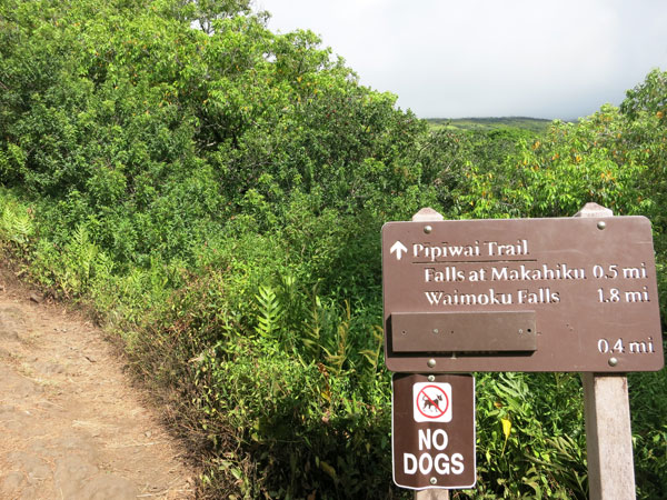 Pipiwai Trail on Maui