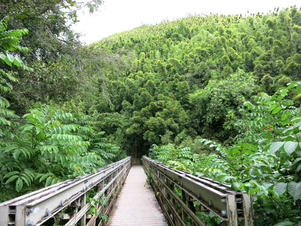 Entrance to Bamboo Forest at Pipiwai Trail on Maui