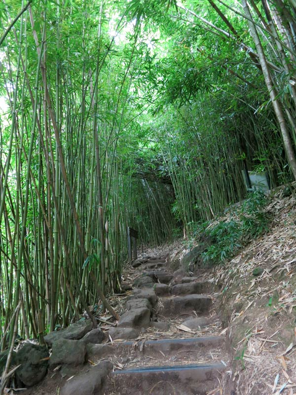 Start of Bamboo Forest at Pipiwai Trail on Maui